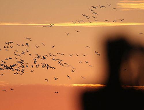 Birdwatching?